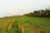 Hà Nội: Dịch vụ cho thuê đất tự trồng rau sạch