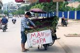 Mận Sapa 'tím bầm': Đích thị hàng Trung Quốc đội lốt