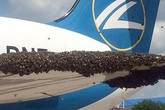 Kinh hoàng máy bay chở khách bị hàng nghìn con ong tấn công