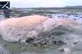 Rùng mình sinh vật lạ xuất hiện sau thảm họa sóng thần