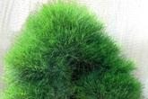 Những loại cây nhất quyết không được trồng trong vườn nhà!