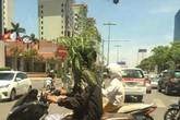 Bức xúc với hình ảnh người dân đội cây để chống nắng khi lái xe