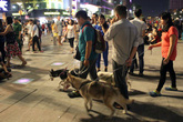 Chó nghìn đô dạo quảng trường đi bộ Nguyễn Huệ