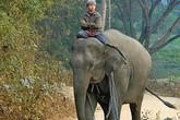 Đang ăn lẩu, người đàn ông bị voi húc chết