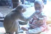 """Hình ảnh bé gái và """"bảo mẫu"""" khỉ cực đáng yêu khiến dư luận phát """"sốt"""""""