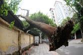 Hà Nội: Giông lốc, cây đổ vào trường học