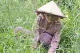 Nữ sinh làm cỏ thuê kiếm tiền vào đại học