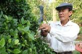 Vườn kiểng độc của chủ nhân cặp khế 7 tỷ đồng