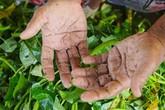 Đôi bàn tay chai sần, ẩm mốc của những người nhặt rau muống thuê ở Sài Gòn