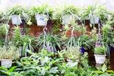 Ngắm khu vườn 30m² ngập tràn rau, cây cảnh trên sân thượng ở Hà Nội