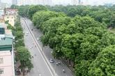 """""""Không lường được tình cảm của người dân với cây xanh"""""""