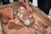 Phát hiện cả chục quả trứng khủng long dưới nền đường