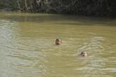 Bé gái 3 tuổi có khả năng bơi như rái cá