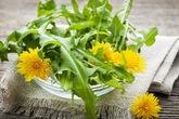 7 lợi ích sức khỏe đáng kinh ngạc của cây bồ công anh