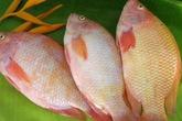 Công dụng chữa bệnh của cá diêu hồng