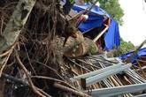 Đang ngủ, 2 công nhân bị cây đổ đè chết