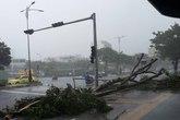 Nhiều cây xanh trên đường phố Đà Nẵng ngã đổ dù bão chưa đổ bộ