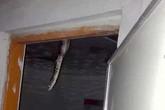 Hãi hùng phát hiện trăn dài hơn 2m trên trần nhà