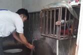 Vỡ ống lần thứ 15, nhiều người Hà Nội trở lại thời... khoan giếng