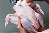 Cách nhận biết gà, ngan, vịt  ăn chất Vàng ô
