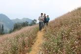 Các điểm ngắm hoa tam giác mạch đẹp ở Hà Giang