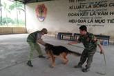 Hốt bạc từ nghề huấn luyện chó câm