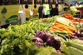 Giá rau xanh tăng gấp đôi nông dân lỗ, người tiêu dùng thiệt