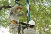 Hà Nội: Cắt điện hàng loạt để chặt cây, bảo dưỡng đường dây