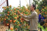 Trồng quất bonsai thu 400 triệu đồng/vụ ở Hà Nội