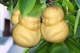 """Có nên mua hoa quả """"lạ"""", bị gò ép dị thường về cúng Tết?"""