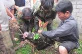 Lợn rừng cắn chết thợ săn