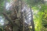 """Cụ ông 92 tuổi cất """"nhà 9 tầng"""" trên cây"""