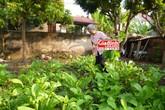 Bật mí loại rượu tự chế giúp cụ bà tuổi bát thập cuốc đất, trồng rau khỏe hơn trai tráng