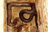 Tỷ phú rắn miền sơn cước