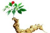Liệu có thảo dược giúp tăng cả sinh lực và sinh lý nam?
