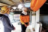 Xã duy nhất ở Thái Bình không có người sinh con thứ 3 về đích nông thôn mới