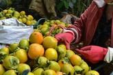 Tắc ruột vì ăn quá nhiều những loại quả vốn bổ dưỡng