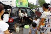 Vợ chồng chở dê lên phố bán sữa tươi nguyên chất