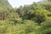 Phát hiện xác chết trên đồi keo mất 6 răng cửa