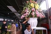 Hoa lan Trung Quốc đắt hàng ngày cận Tết