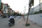 Hà Nội: Hàng loạt cây xanh chết khô, bật gốc không người dọn