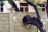 7 nguyên tắc vàng khi dùng cây cối làm phong thủy