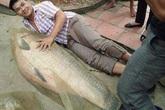 """Bắt được cá trắm """"khủng"""" nặng tới 52kg"""