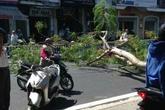 Cây ngã đổ, đè một nữ cảnh sát bị thương