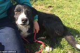 Chú chó vượt gần 400km trong 12 ngày để tìm về với chủ cũ