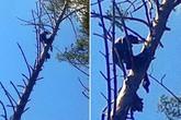 Xác chết ngồi trên cành cây 8 tháng mới được phát hiện