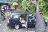 Xà cừ đổ ngang ô tô, 2 bố con thoát chết trong gang tấc