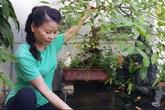 Mẹ Hồ Ngọc Hà vác đất chai tay để trồng rau trên sân thượng