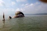 """Dịch vụ ăn theo sự kiện cá voi """"khủng"""" chết ở vùng biển Nghệ An"""