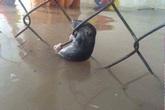 Sự bất lực của một con chuột